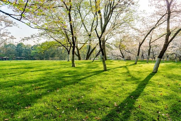 Arbres et pelouses Photo gratuit