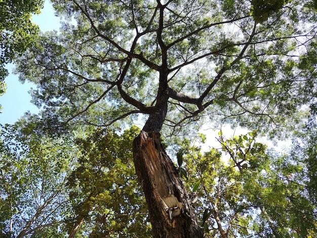 Des arbres qui tolèrent des environnements cruels. Photo Premium