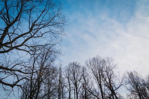 Arbres Sans Feuilles En Hiver Photo Premium