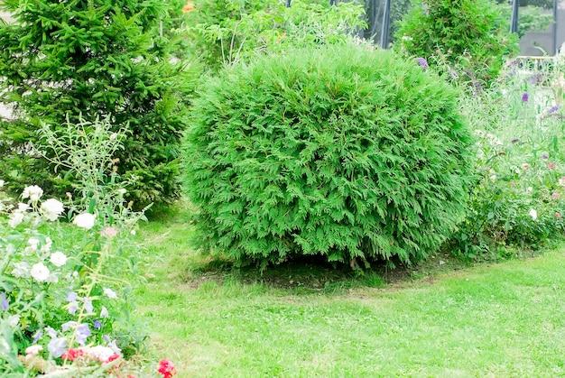 Arbres verts et arbustes dans le parc urbain Photo Premium