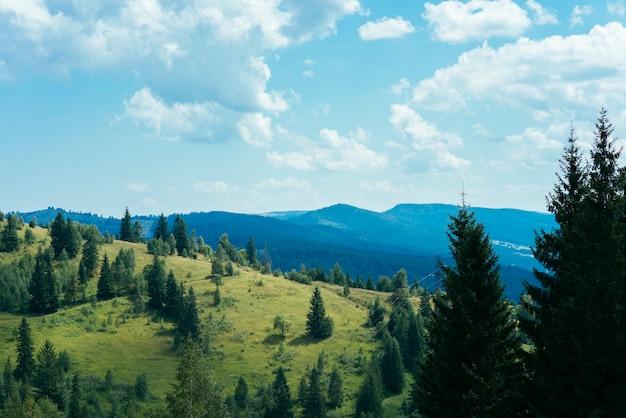 Arbres verts sur la montagne Photo gratuit