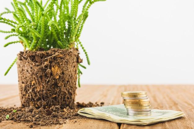 Argent avec plante sur table Photo gratuit