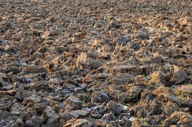 Argile craquelée sèche sur les rizières en saison de sécheresse Photo Premium