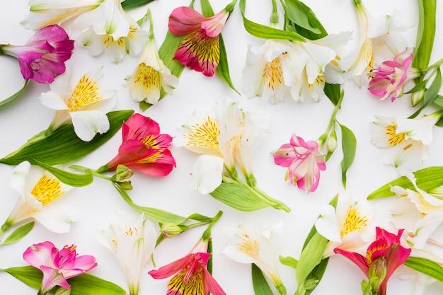 Arrangement D'alstroemeria Blanc Et Coloré à Plat Photo Premium