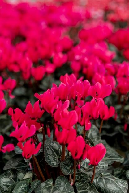 Arrangement Avec De Belles Fleurs Rouges Photo gratuit