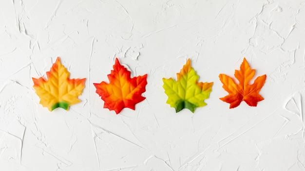 Arrangement de feuilles colorées sur fond blanc Photo gratuit