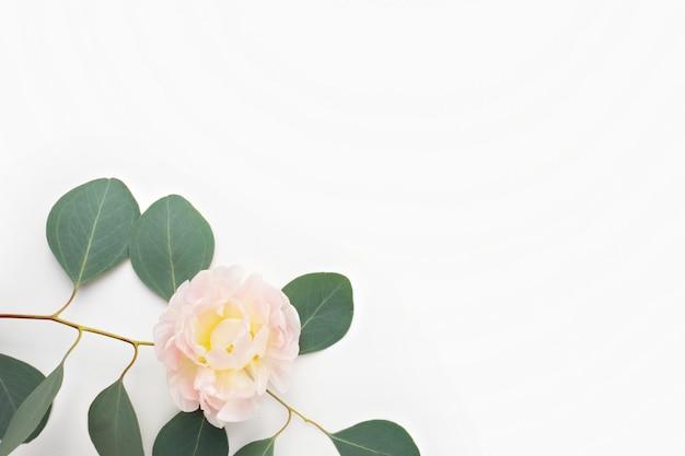 Arrangement de fleurs. feuilles d'eucalyptus et fleurs roses Photo Premium