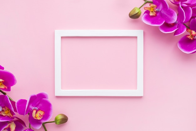 Arrangement de fleurs d'orchidées sur un fond d'espace de copie rose Photo gratuit