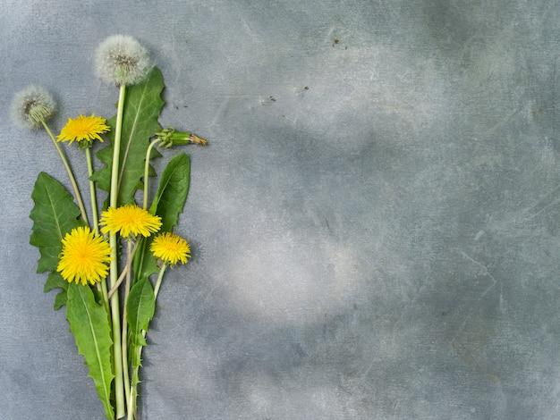 Arrangement de fleurs de pissenlits sur fond gris. Photo Premium