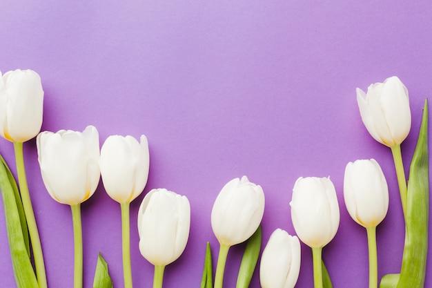 Arrangement De Fleurs De Tulipe Blanche à Plat Photo gratuit