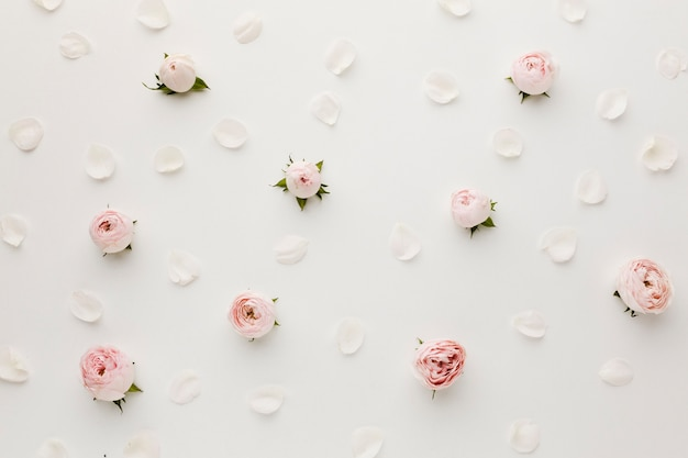 Arrangement De Roses Et De Pétales Vue De Dessus Photo gratuit