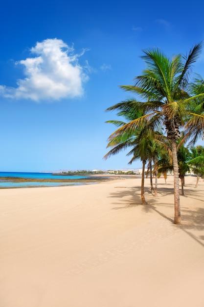 Arrecife lanzarote playa reducto palmiers Photo Premium