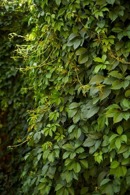 Arrière-plan flou vert naturel au soleil, bokeh rond abstrait de feuilles vertes Photo Premium