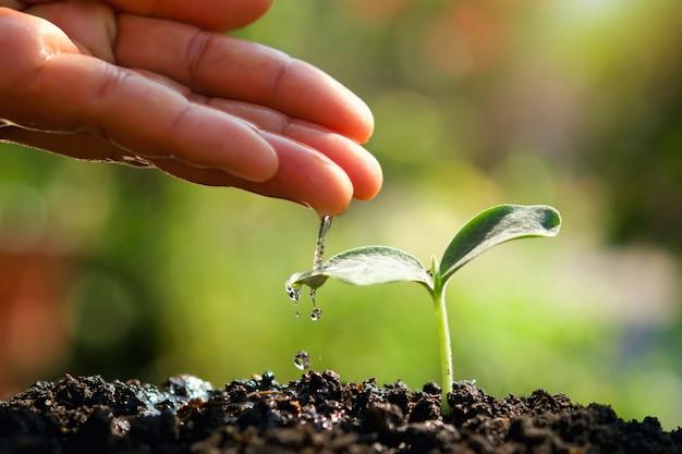 Arroser une jeune plante dans le jardin pour une nouvelle vie de soin Photo Premium
