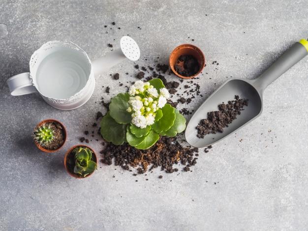 Arrosoir avec des semis et de la terre sur le plancher de granit Photo gratuit