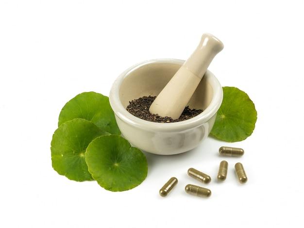 Asiatique feuille herbe gotu kola, pennywort indien, centella asiatica, herbe tropicale Photo Premium