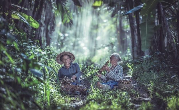 Asiatique vieille femme travaillant dans la forêt tropicale, thaïlande Photo Premium