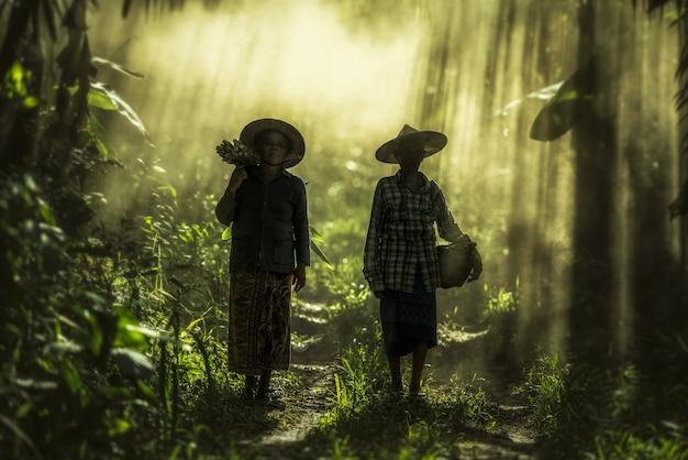 Asiatique vieille femme travaillant dans la forêt tropicale Photo Premium