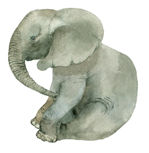 Assis drôle d'éléphant Photo Premium