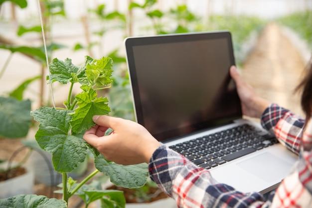 Assistante Scientifique, Agente D'agriculture. Dans Le Melon De Recherche De Ferme De Serre Photo gratuit