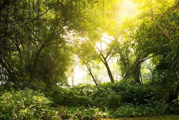 Aube d'automne en forêt Photo Premium