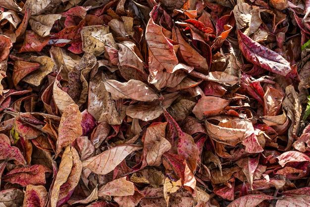 Automne feuilles fond Photo Premium