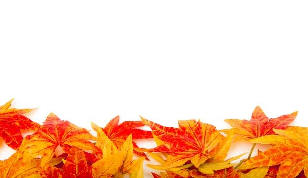 Automne feuilles sèches sur un fond blanc Photo gratuit