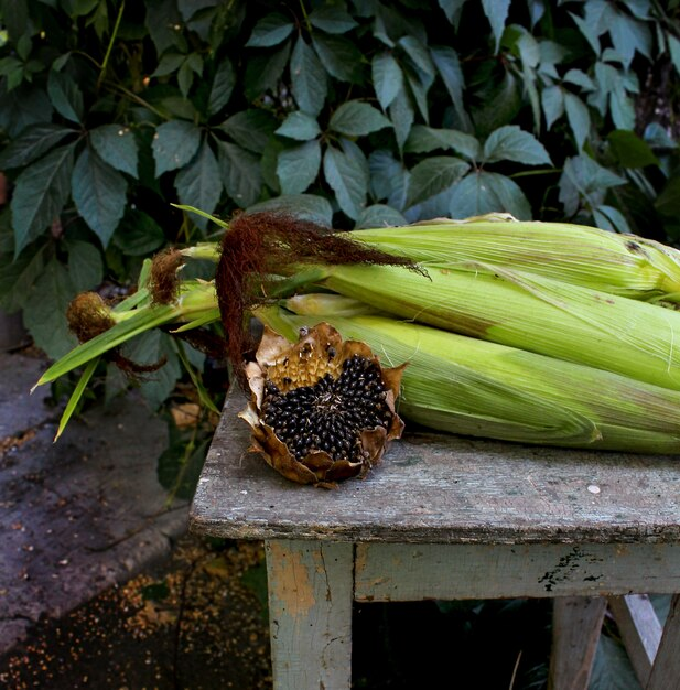 Automne jardin de maïs tournesol Photo Premium
