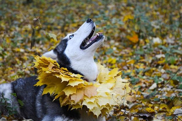 L'automne. promenez-vous dans les bois avec un animal de compagnie. Photo Premium