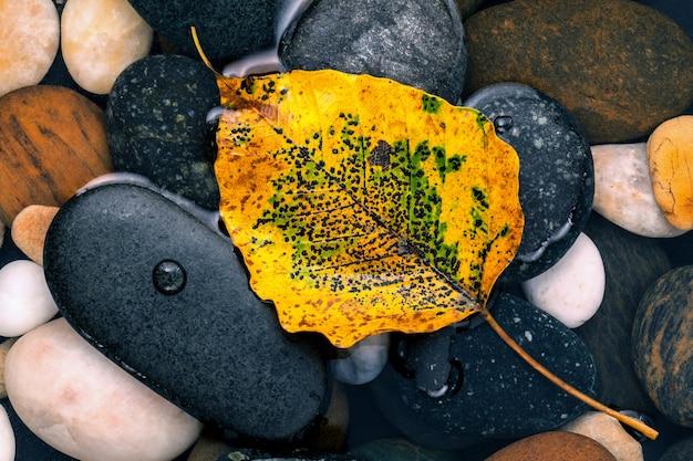 L'automne et le zen comme les concepts orange partent sur la pierre de la rivière. Photo Premium