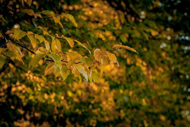 Autumm congé et nature floue. feuillage coloré dans le parc. chute des feuilles fond naturel. saison d'automne Photo Premium