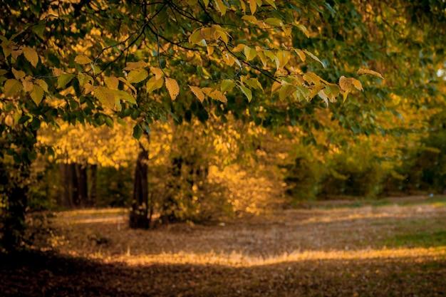 Autumm congé et nature floue. feuillage coloré dans le parc. chute des feuilles naturelles. saison d'automne Photo Premium