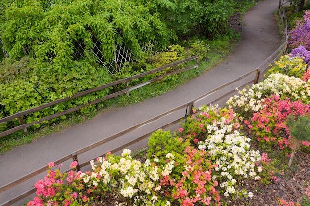 Les Azalées Fleurissent Sur Un Parterre De Fleurs Dans Le Parc. Fleurs Printanières Multicolores. Photo Premium