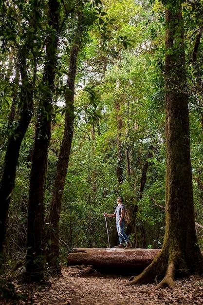 Backpacker en forêt avec des arbres élevés Photo gratuit