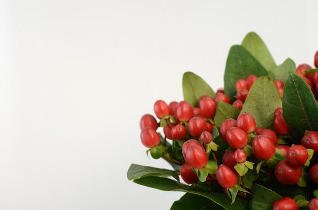 Baies d'hypericum rouge Photo Premium