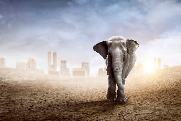 Balade D'éléphant De Sumatra Dans Le Désert Photo Premium