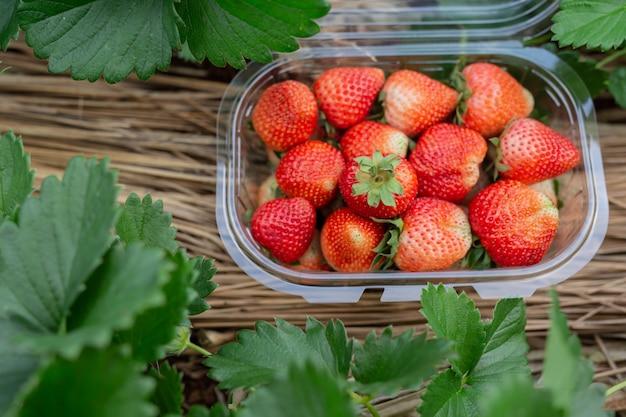 Balle de fraise dans la boîte. Photo gratuit
