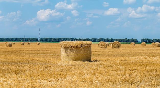 Balles De Foin Sur Le Terrain Après La Récolte. Photo gratuit