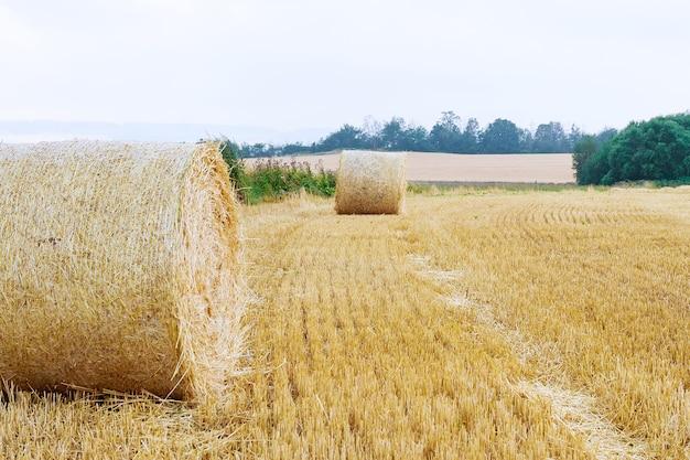 Balles Rondes De Paille Sur Les Terres Agricoles Contre Un Ciel Bleu Nuageux. Champ Tondu Après La Récolte Du Blé. Photo Premium