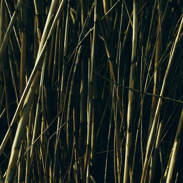 Bambou vert poussant dans le jardin Photo gratuit