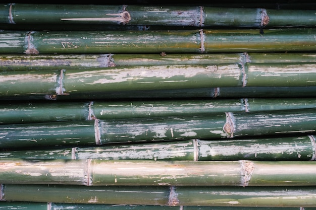 Bambou vert Photo gratuit