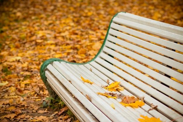 Banc blanc dans le parc en automne. Photo Premium