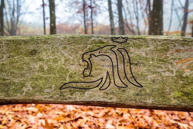 Banc En Bois Dans La Forêt Brumeuse Au Luxembourg Photo Premium