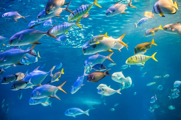 Banc de poissons de mer nagent jusqu'à la surface de l'eau Photo Premium