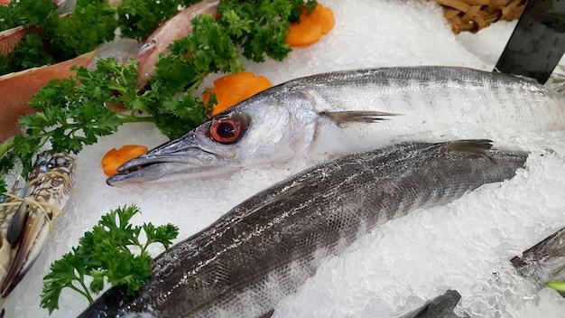 Barracuda poisson sur une glace. Photo Premium