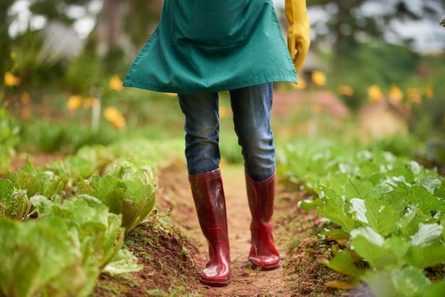 Basse section de fermier anonyme en bottes de caoutchouc marchant le long des lits de jardin Photo gratuit