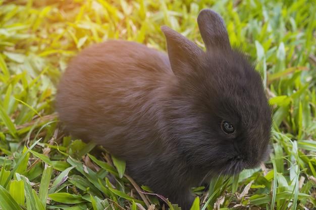 Beau bébé 2 semaines de lapin thaïlandais Photo gratuit