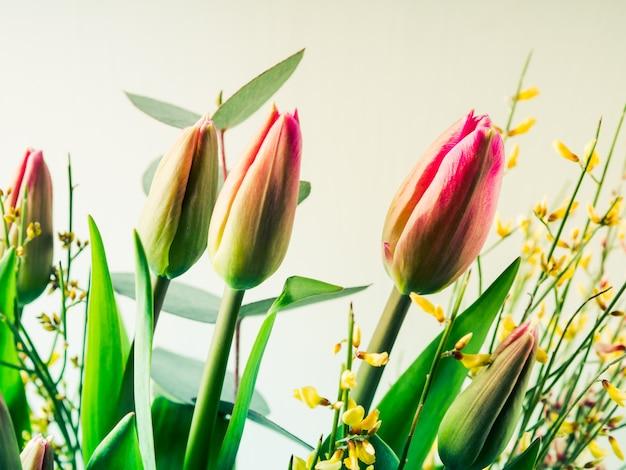Beau bouquet de tulipes sur pastel Photo Premium