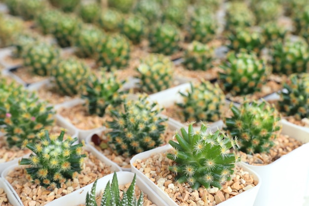 Beau cactus à vendre Photo Premium