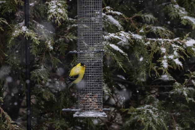 Beau Canari Assis Sur Un Récipient De Graines Par Les Arbres Couverts De Neige Photo gratuit